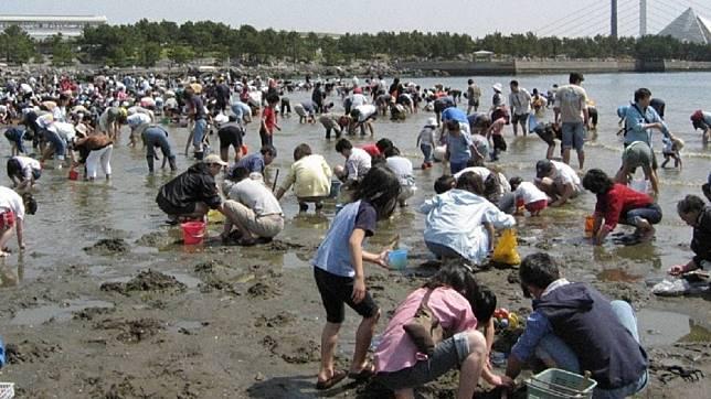 大陸遊客在日本江戶川河口狂挖免費生蠔。圖/翻攝自頭條日報