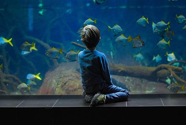 日本夢幻水族館一次蒐集!親子出國必帶懶人包都在這裡